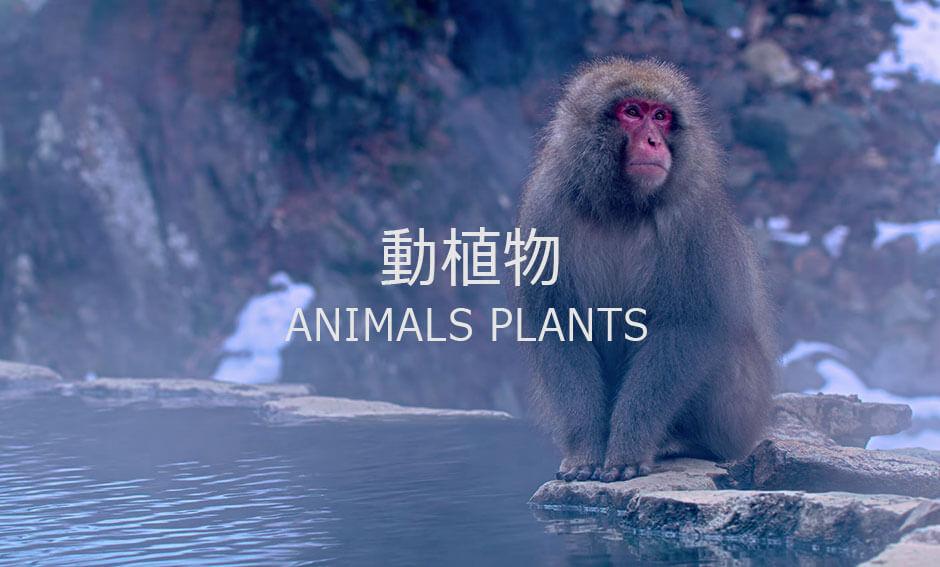 動植物ジャンルの8K映像