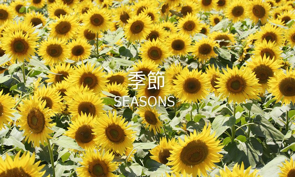 季節ジャンルの8K映像