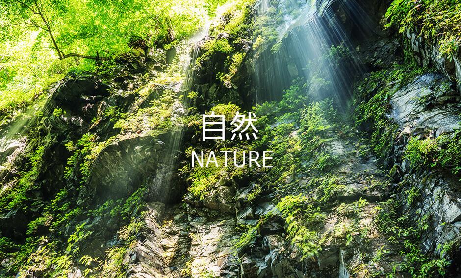 自然ジャンルの8K映像