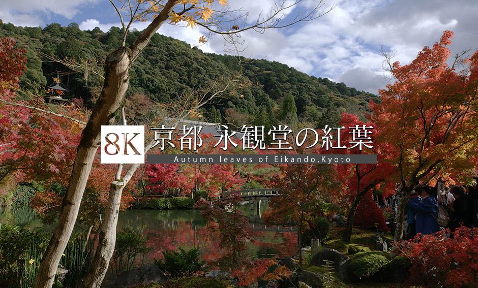 京都 紅葉 永観堂_8K