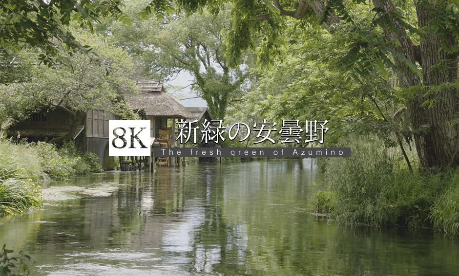 新緑の生い茂る安曇野 _8K