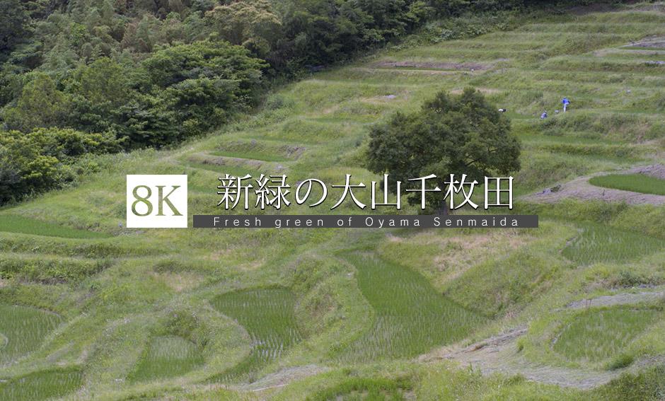 新緑映える大山千枚田_8K