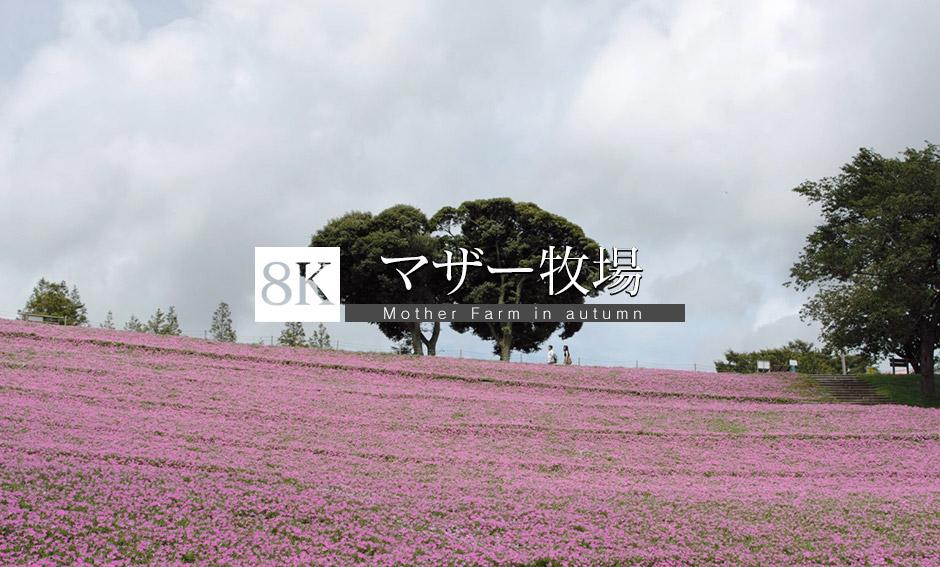 風渡る風景、千葉富津市より_8K