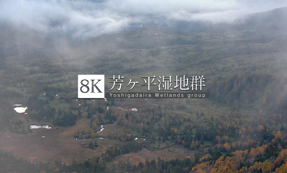 朝霧の幻想、芳ヶ平湿地群の紅葉_8K