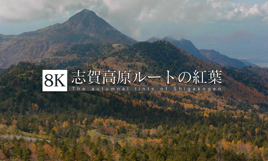 志賀草津高原ルートの紅葉_8K