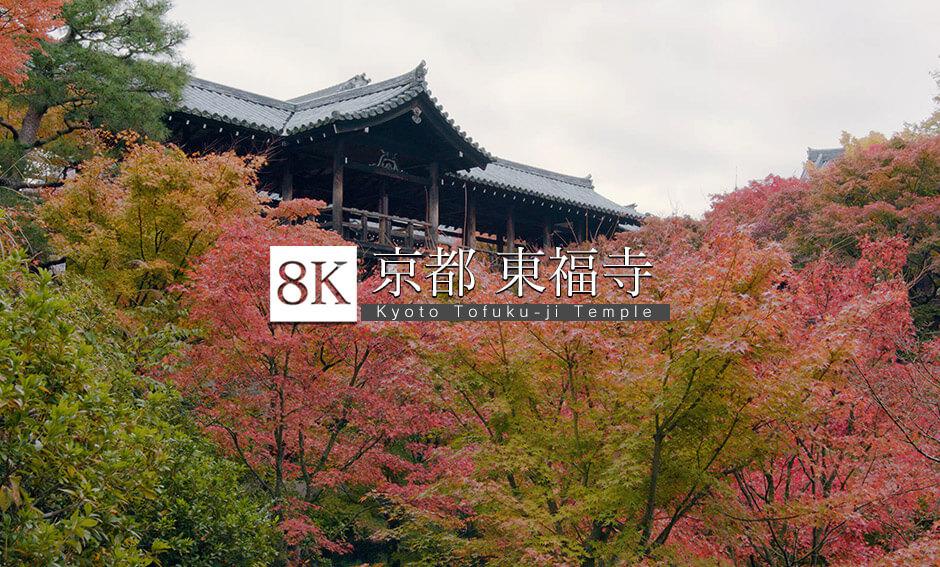 京都、紅葉の名所の伽藍面_8K