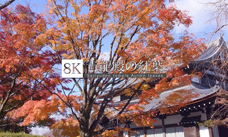 京都東山 青龍殿の紅葉_8K