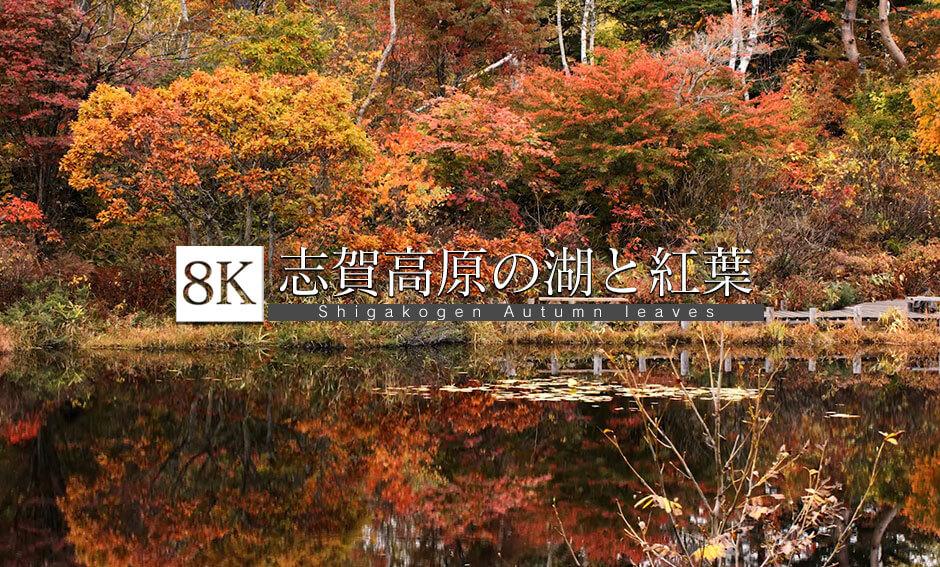 志賀高原の湖と紅葉めぐり_8K