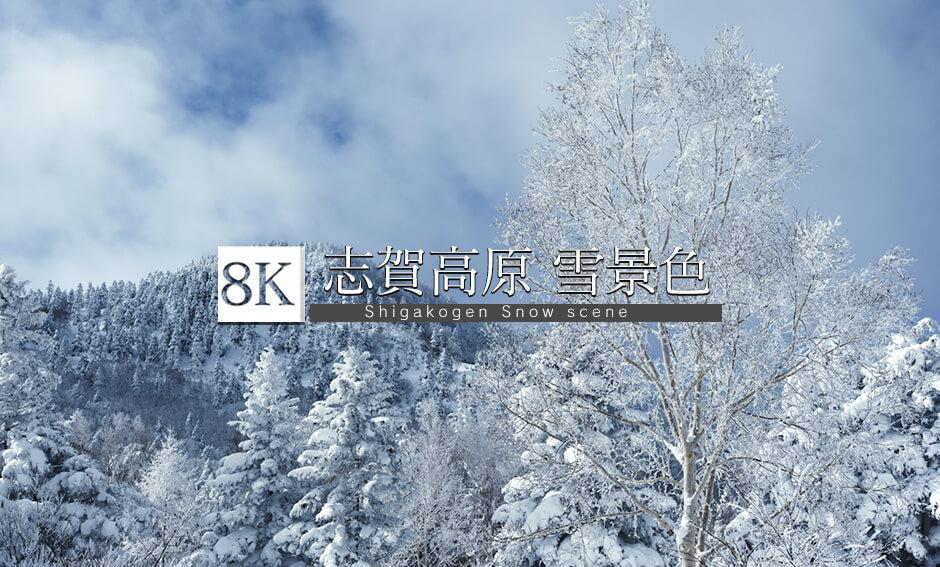 志賀高原の壮観!雪景色_8K