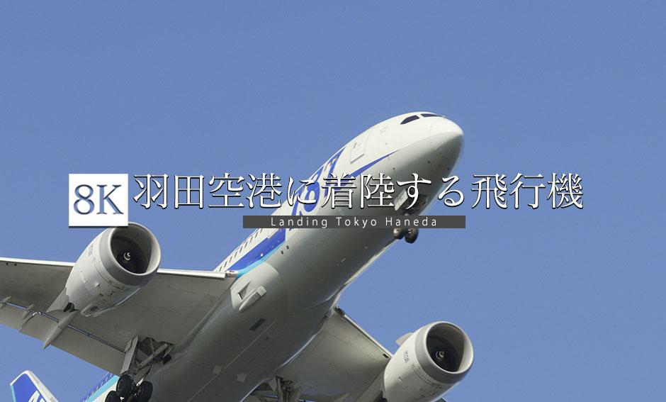 飛行機、着陸の瞬間_東京国際空港_8K