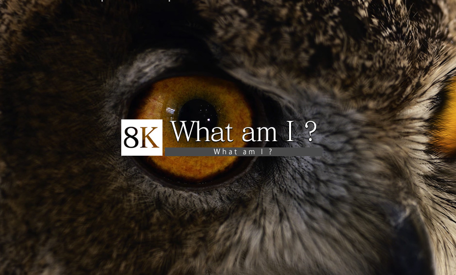 What am I ?_8K