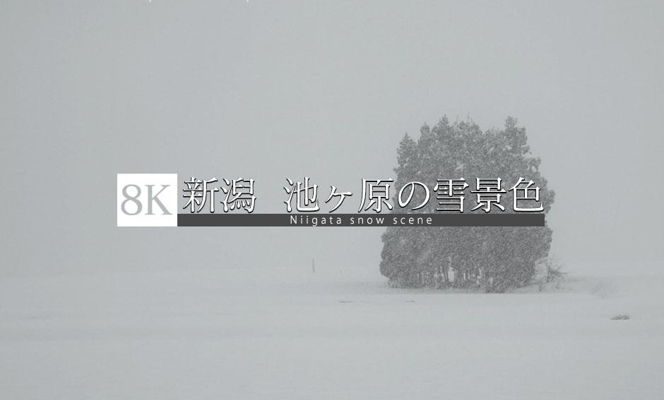 池ヶ原のはさ木、雪景色