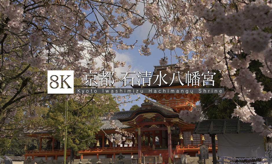 京都の国宝、石清水八幡宮と桜_8K