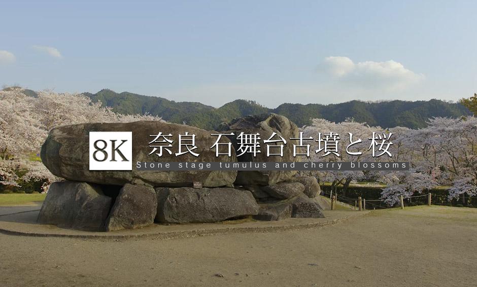 1400年の歴史・奈良 石舞台古墳と桜_8K
