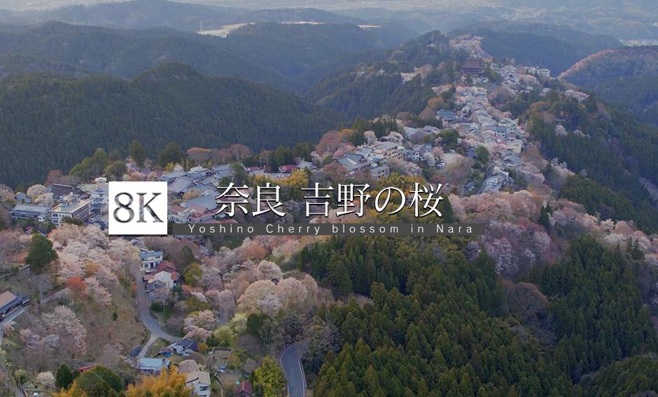 DRONE_奈良・吉野の桜_8K