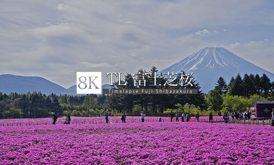 TL_富士芝桜まつり_8K