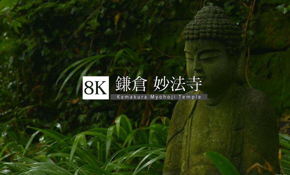 鎌倉・妙法寺_8K