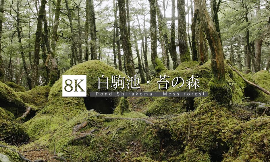 白駒池・苔の森_8K