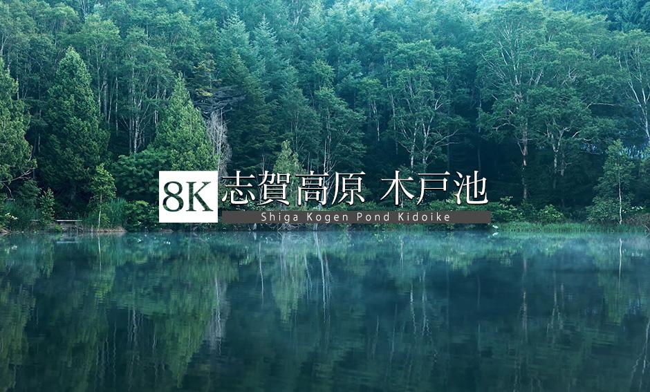 朝の光差す、志賀高原・木戸池_8K