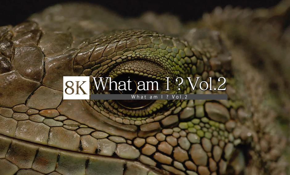 What am I ? vol.2_8K