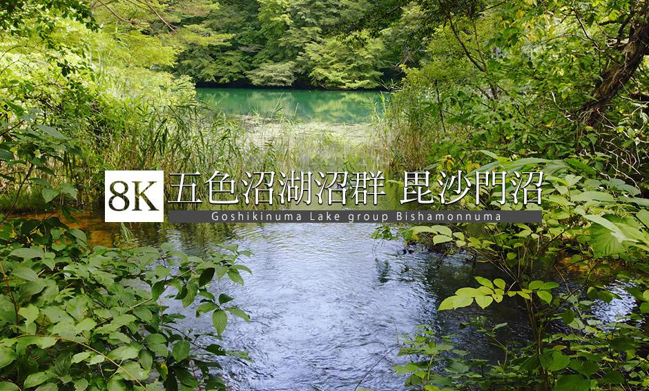 五色沼湖沼群〜毘沙門沼_8K