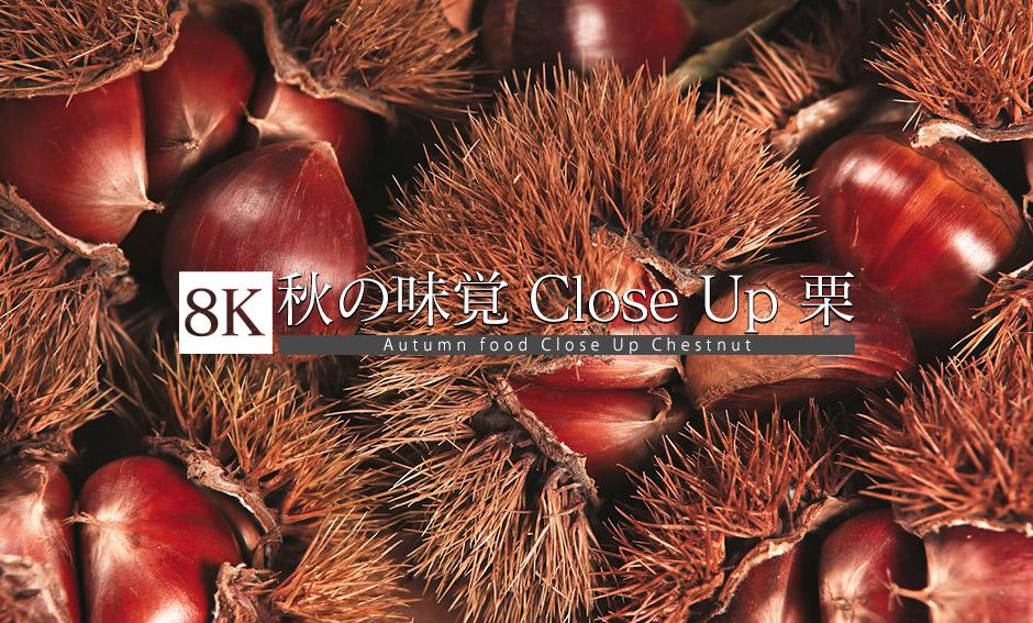 秋の味覚 CloseUp 栗_8K