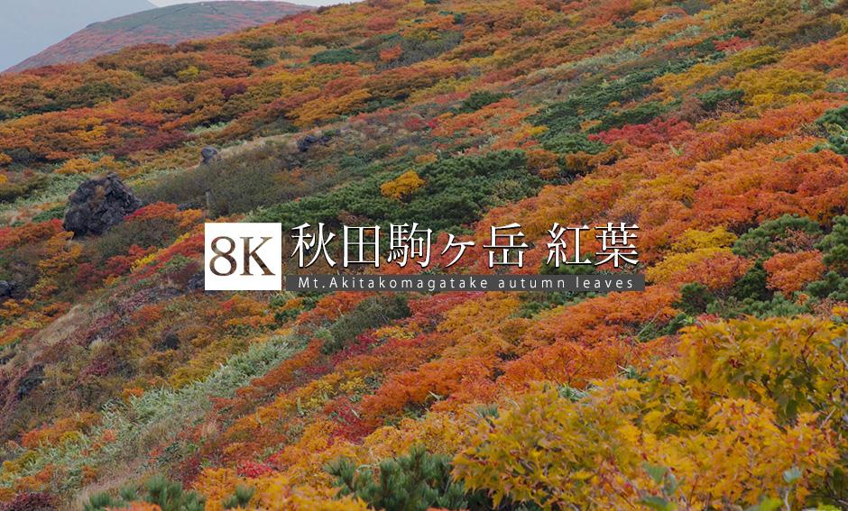 秋田駒ヶ岳 vol.1 紅葉