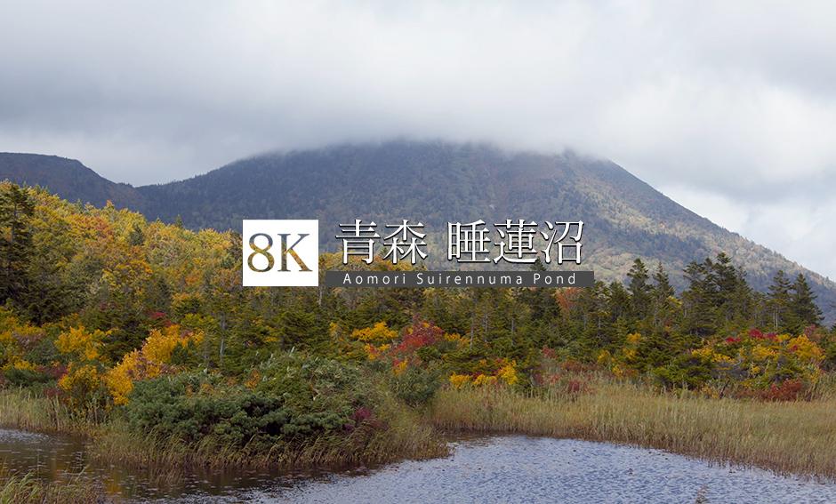 青森 睡蓮沼_8K