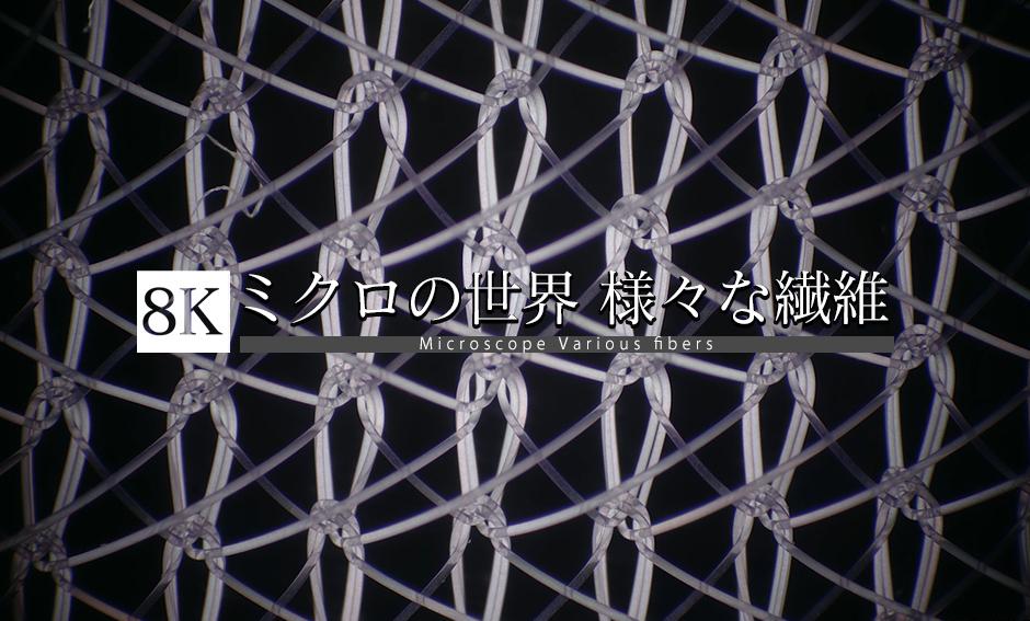 ミクロの世界 様々な繊維_8K