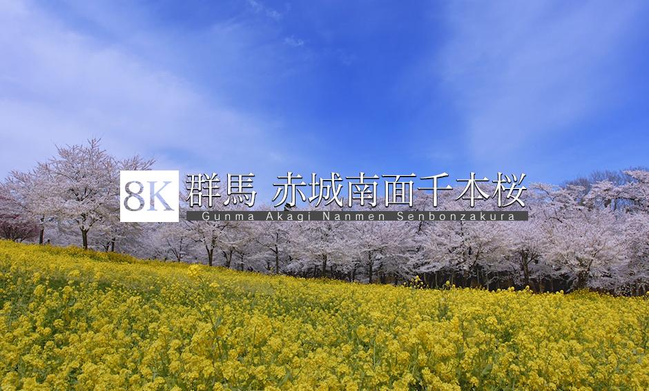 群馬 赤城南面千本桜_8K