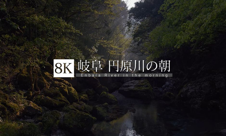 岐阜・円原川の朝_8K