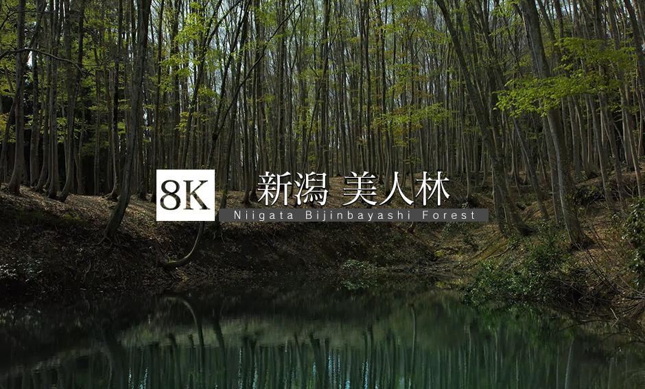 新潟 美人林_8K