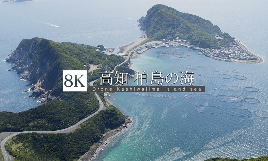 高知 柏島 最高の海_8K