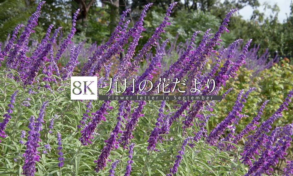 9月の花だより_8K