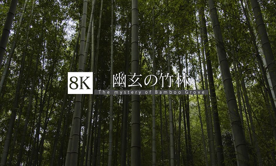 幽玄の竹林_8K