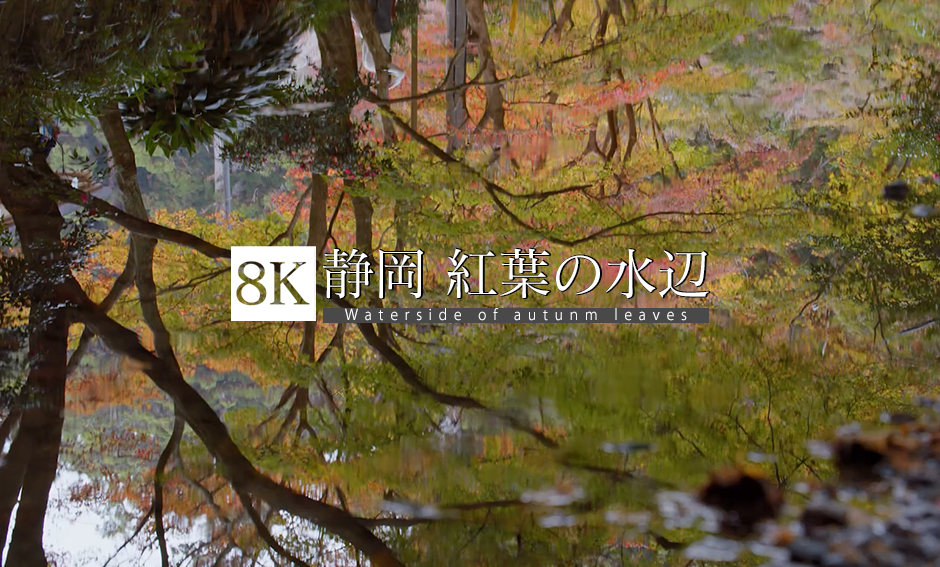 静岡 紅葉の水辺_8K