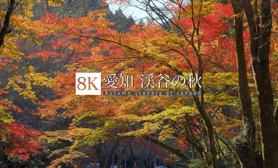 愛知 渓谷の秋_8K