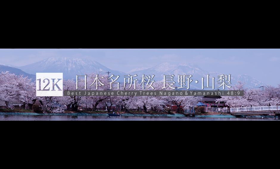 日本桜名所 長野・山梨 12K WIDE 48:9